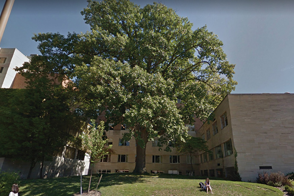 Person sitting below Dean Meek's tree